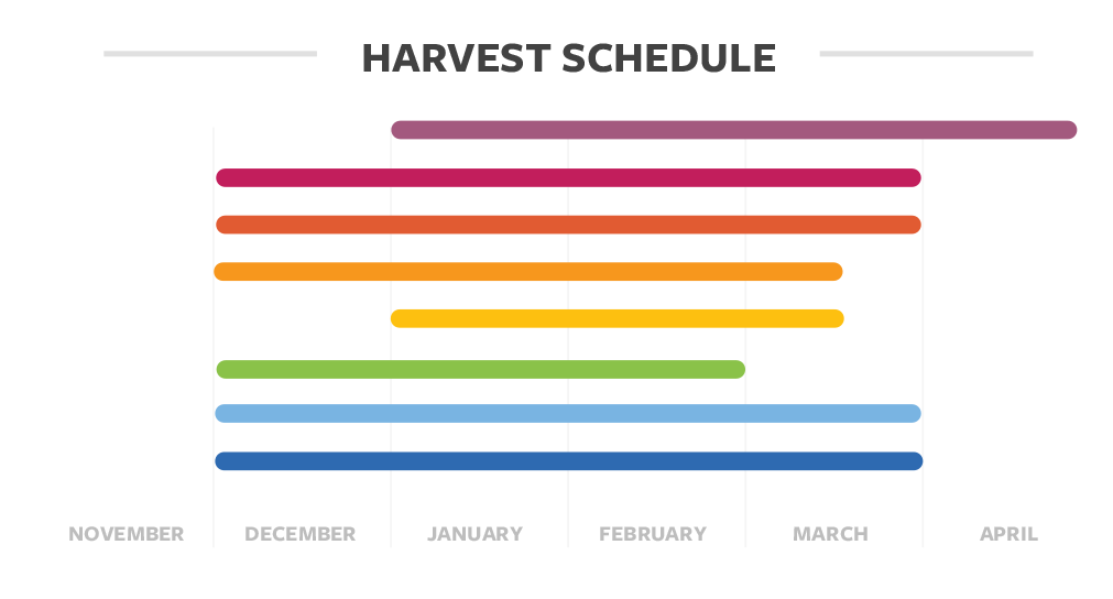 Harvest schedule details for coffee in Guatemala
